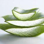 The Lexli Difference aloe vera crop